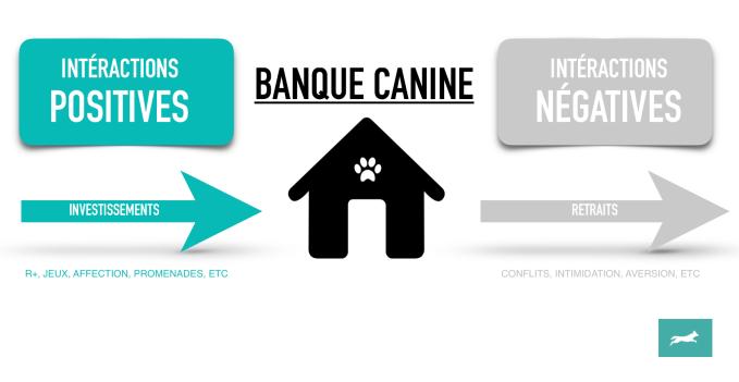 Comment améliorer la relation avec notre chien ? En lui ouvrant un compte en banque pardi!
