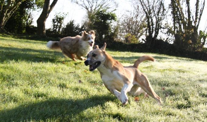 Le chien réactif #3- Gérer lessorties