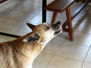 Mon chien aboie lorsqu'il entend des bruits – Que faire ?#2
